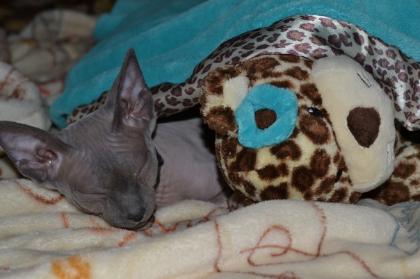 Why, Yes. I do Sleep With a Stuffed Animal!